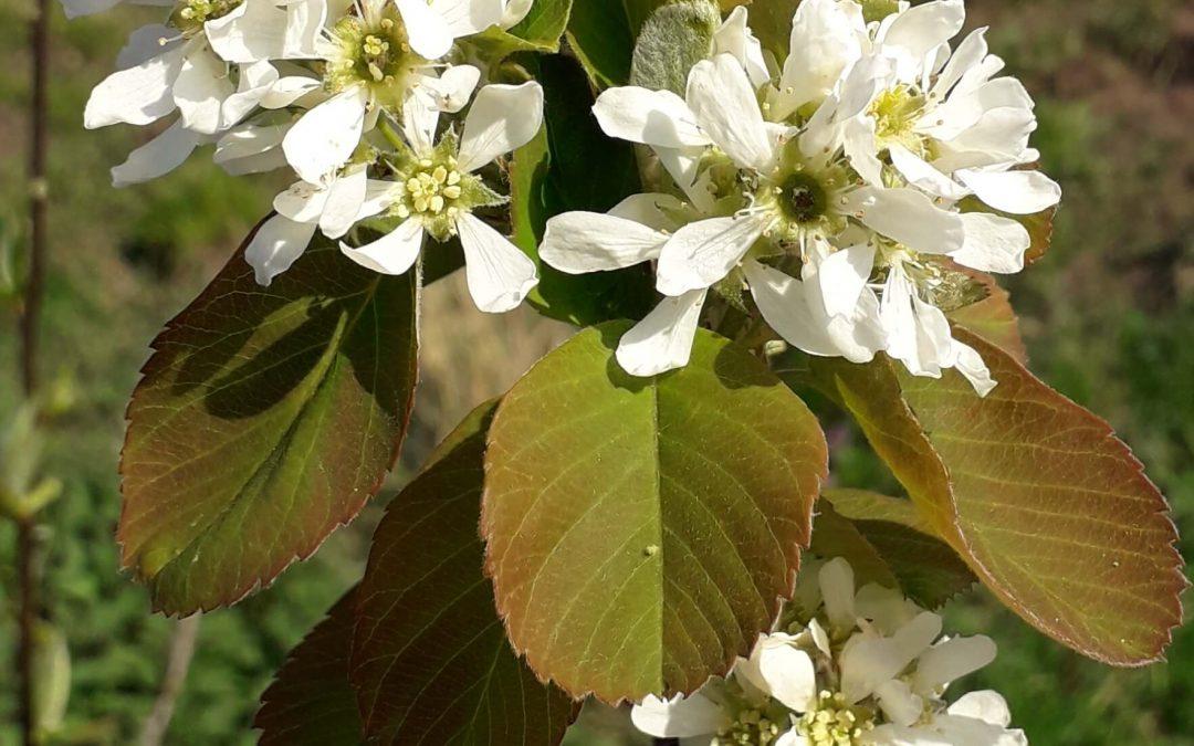 Uitbundige bloei om later van te smullen van bekende en onbekende planten.